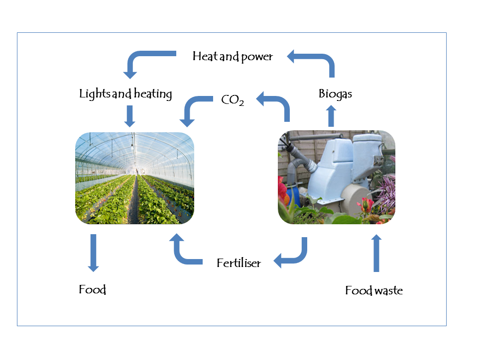 The integrated biogas-greenhouse system